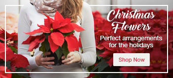 View our Christmas flower range for Sydney Delivery