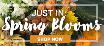 View our spring flower range